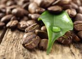 Granos de cafe y hoja cafetal