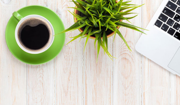 Cafe solo con cactus y ordenador