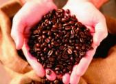 El consejo médico sobre el consumo de café.